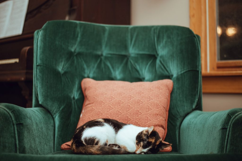 cat on arm chair