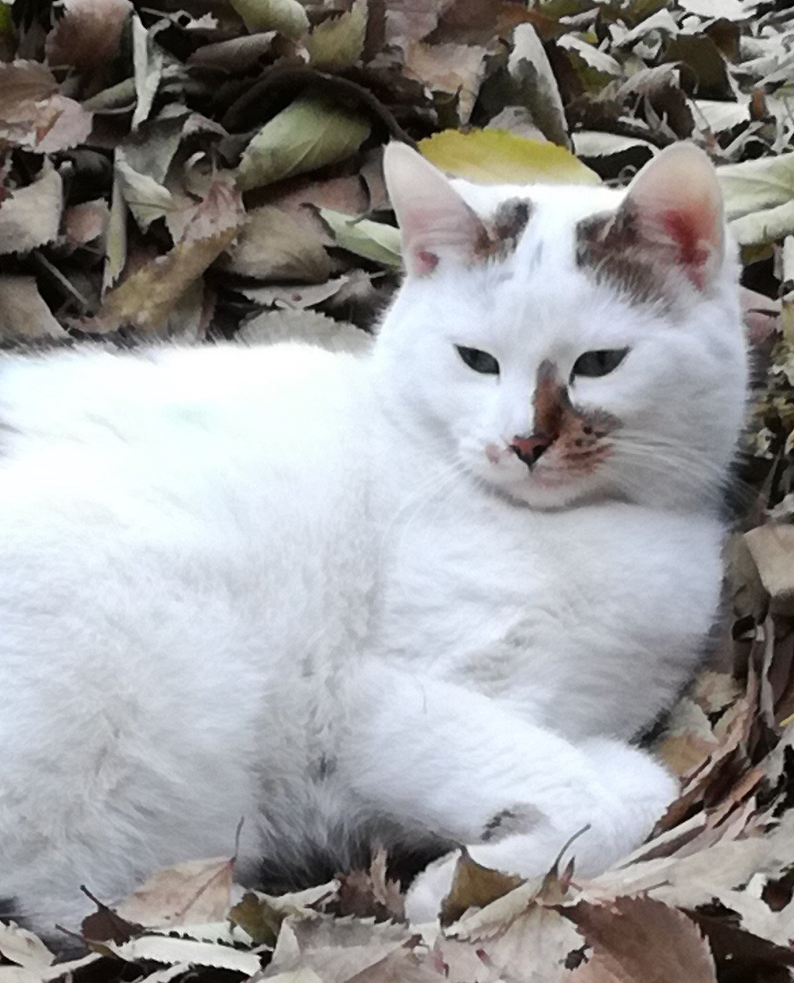 Cat Gerrard laying in the leaves